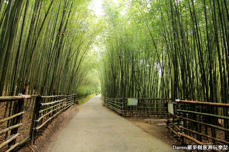 泰安竹林秘境