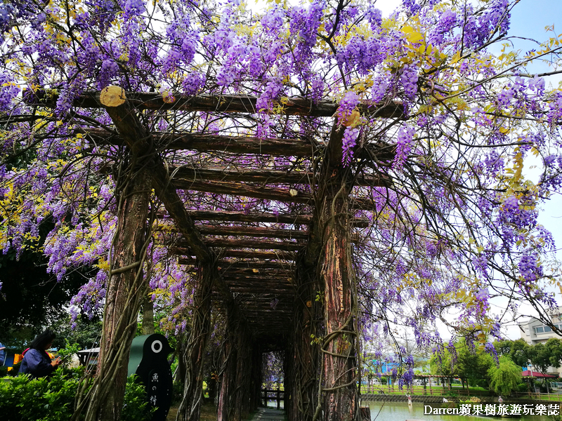 紫藤花桃園