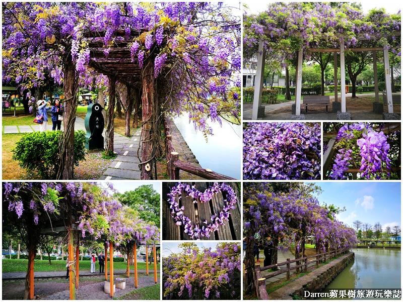 桃園紫藤花懶人包